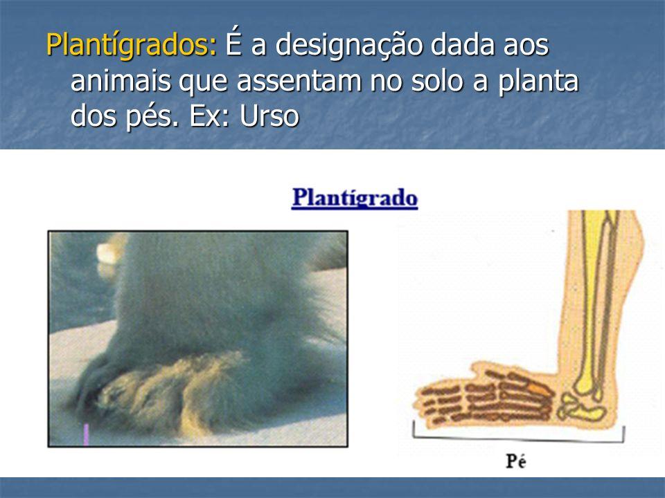 Plantígrados: É a designação dada aos animais que assentam no solo a planta dos pés. Ex: Urso