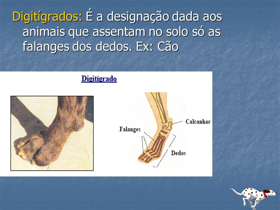 Digitígrados: É a designação dada aos animais que assentam no solo só as falanges dos dedos. Ex: Cão