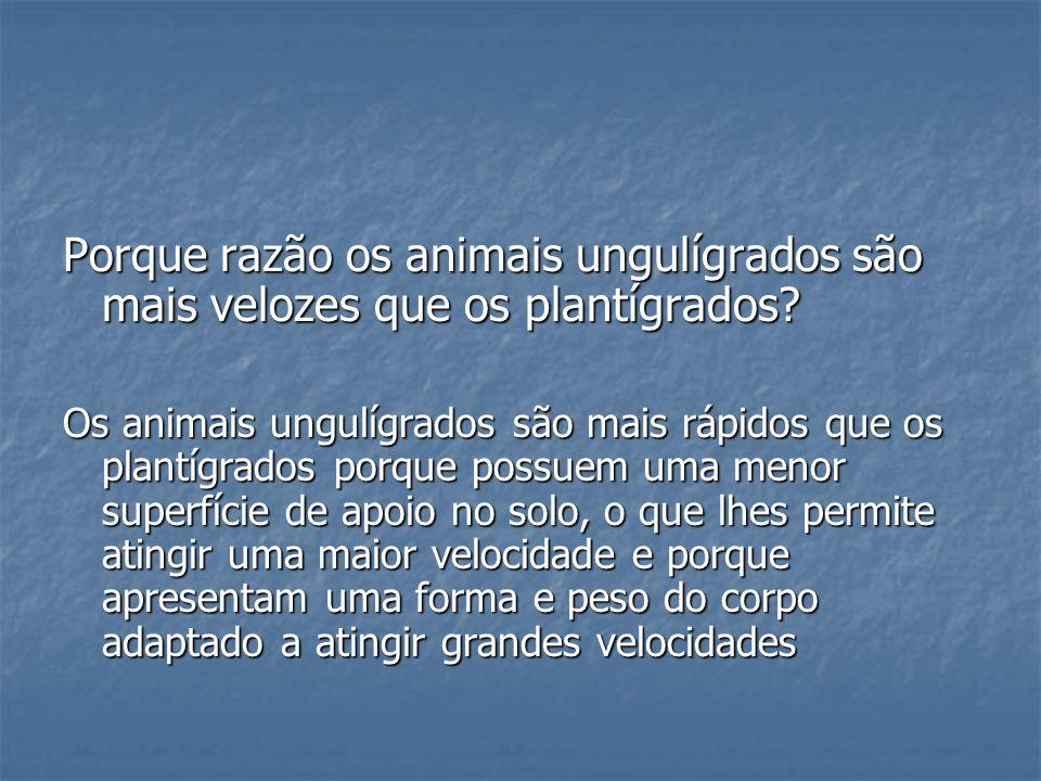 Porque razão os animais ungulígrados são mais velozes que os plantígrados? Os animais ungulígrados são mais rápidos que os plantígrados porque possuem
