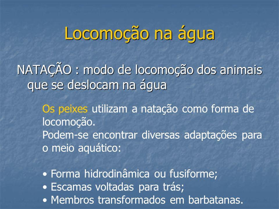 Locomoção na água NATAÇÃO : modo de locomoção dos animais que se deslocam na água Os peixes utilizam a natação como forma de locomoção. Podem-se encon