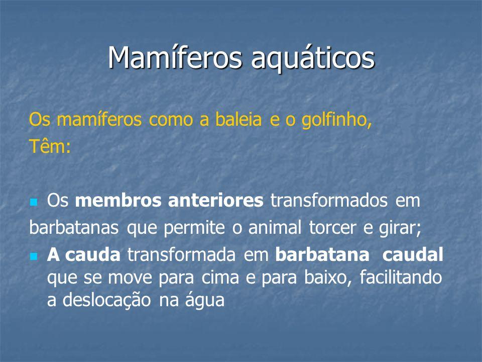 Mamíferos aquáticos Os mamíferos como a baleia e o golfinho, Têm: Os membros anteriores transformados em barbatanas que permite o animal torcer e gira