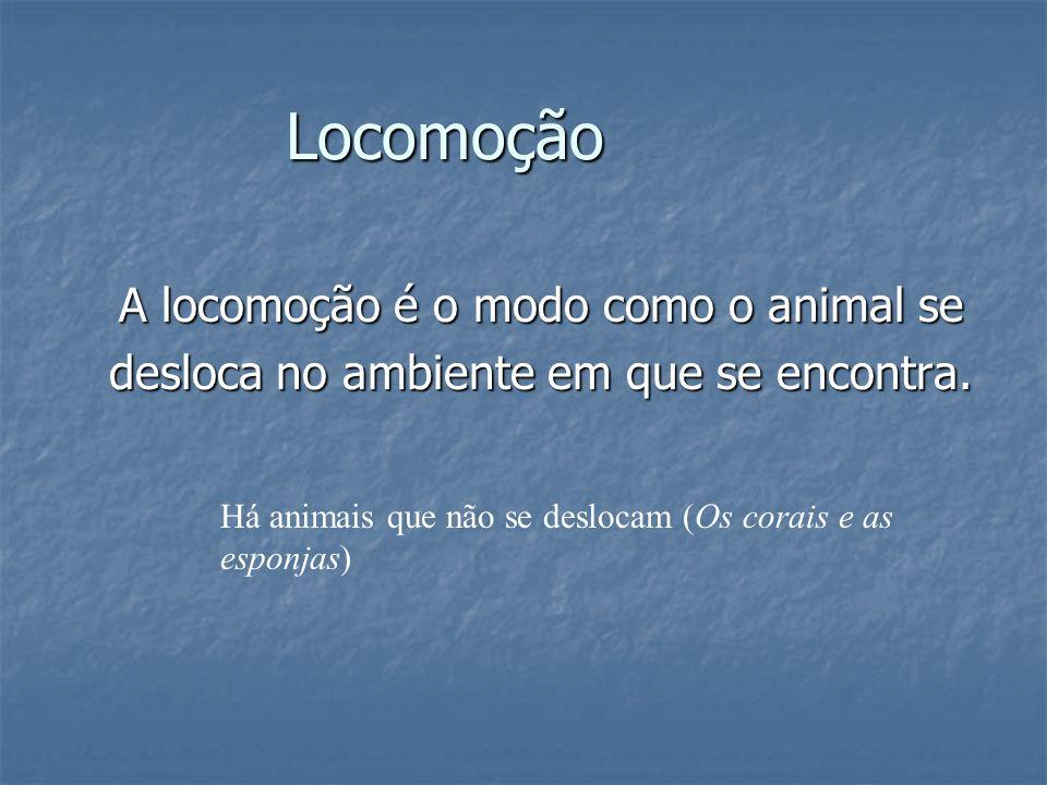 Locomoção A locomoção é o modo como o animal se desloca no ambiente em que se encontra. Há animais que não se deslocam (Os corais e as esponjas)