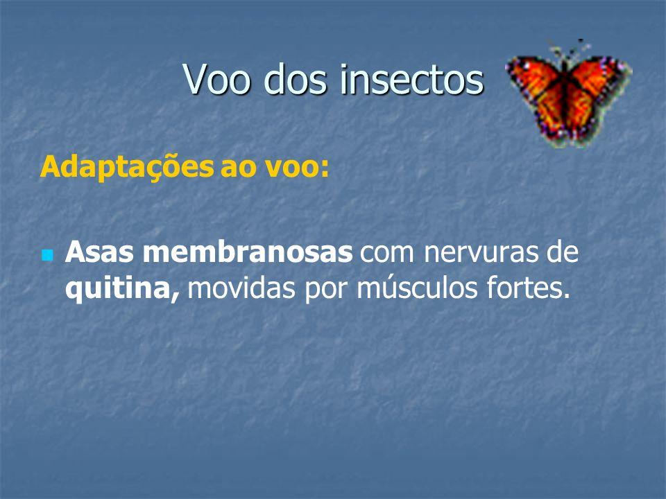 Voo dos insectos Adaptações ao voo: Asas membranosas com nervuras de quitina, movidas por músculos fortes.