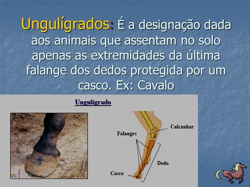 Ungulígrados : É a designação dada aos animais que assentam no solo apenas as extremidades da última falange dos dedos protegida por um casco. Ex: Cav