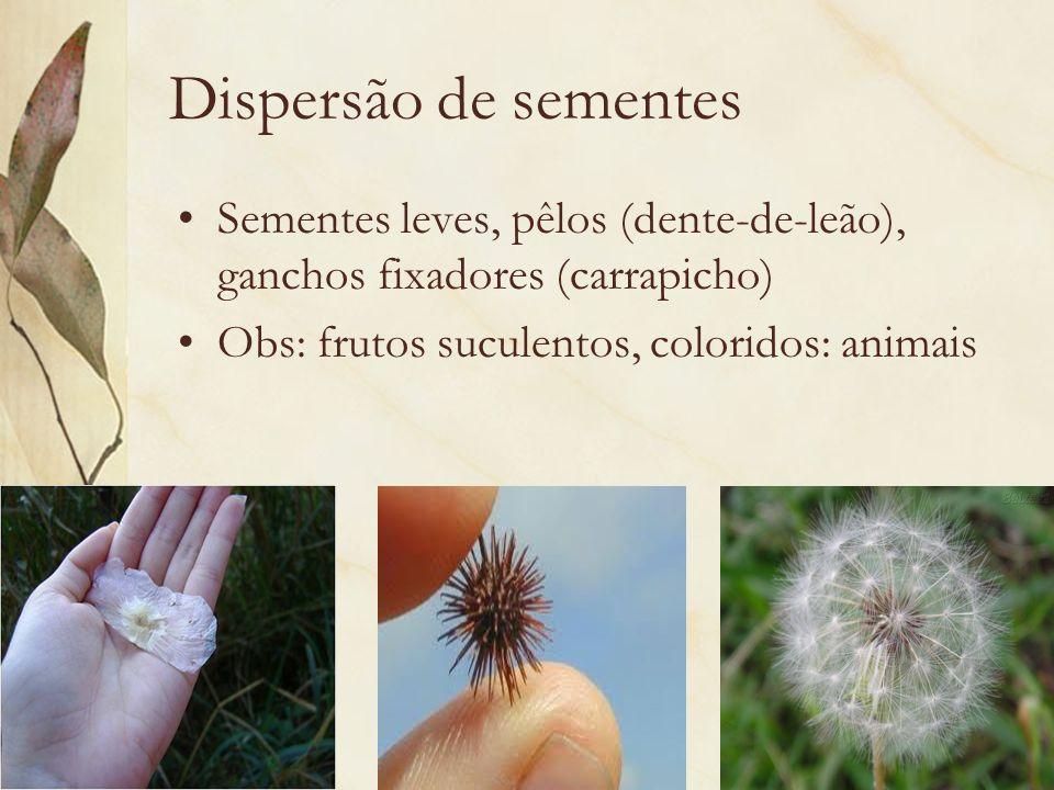 Dispersão de sementes Sementes leves, pêlos (dente-de-leão), ganchos fixadores (carrapicho) Obs: frutos suculentos, coloridos: animais