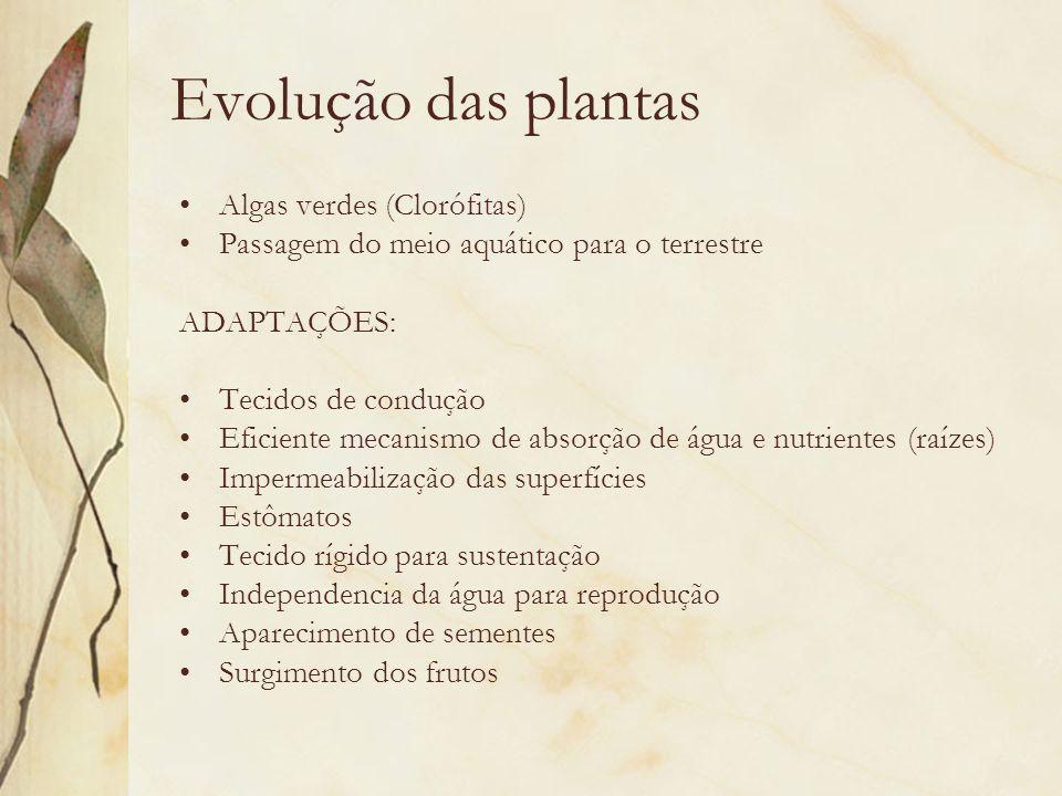 Evolução das plantas Algas verdes (Clorófitas) Passagem do meio aquático para o terrestre ADAPTAÇÕES: Tecidos de condução Eficiente mecanismo de absor