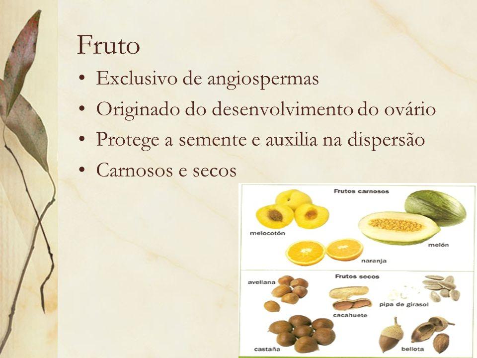 Fruto Exclusivo de angiospermas Originado do desenvolvimento do ovário Protege a semente e auxilia na dispersão Carnosos e secos