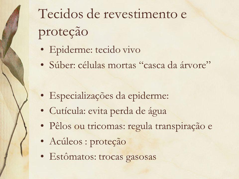 Tecidos de revestimento e proteção Epiderme: tecido vivo Súber: células mortas casca da árvore Especializações da epiderme: Cutícula: evita perda de á