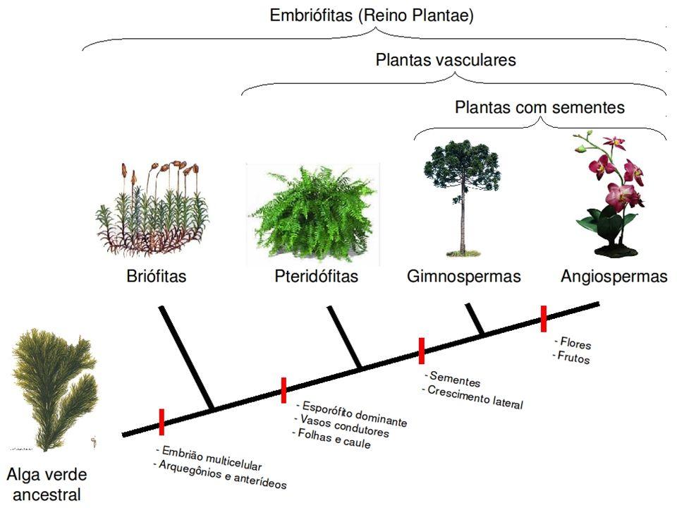 Partenocarpia Desenvolvimento do ovário em fruto sem que haja fecundação, ou seja, sem a formação de sementes.
