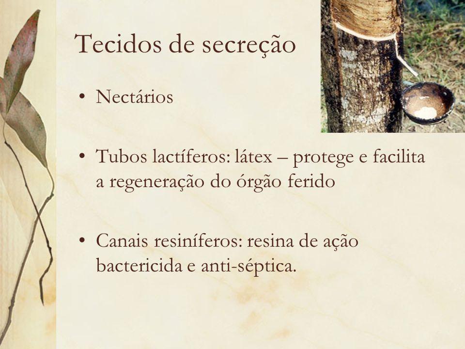 Tecidos de secreção Nectários Tubos lactíferos: látex – protege e facilita a regeneração do órgão ferido Canais resiníferos: resina de ação bactericid