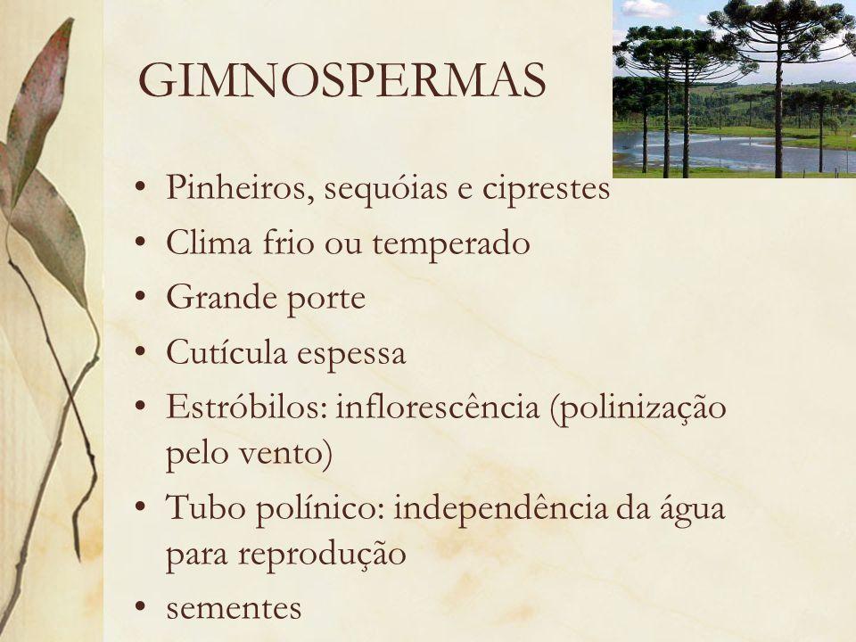 GIMNOSPERMAS Pinheiros, sequóias e ciprestes Clima frio ou temperado Grande porte Cutícula espessa Estróbilos: inflorescência (polinização pelo vento)