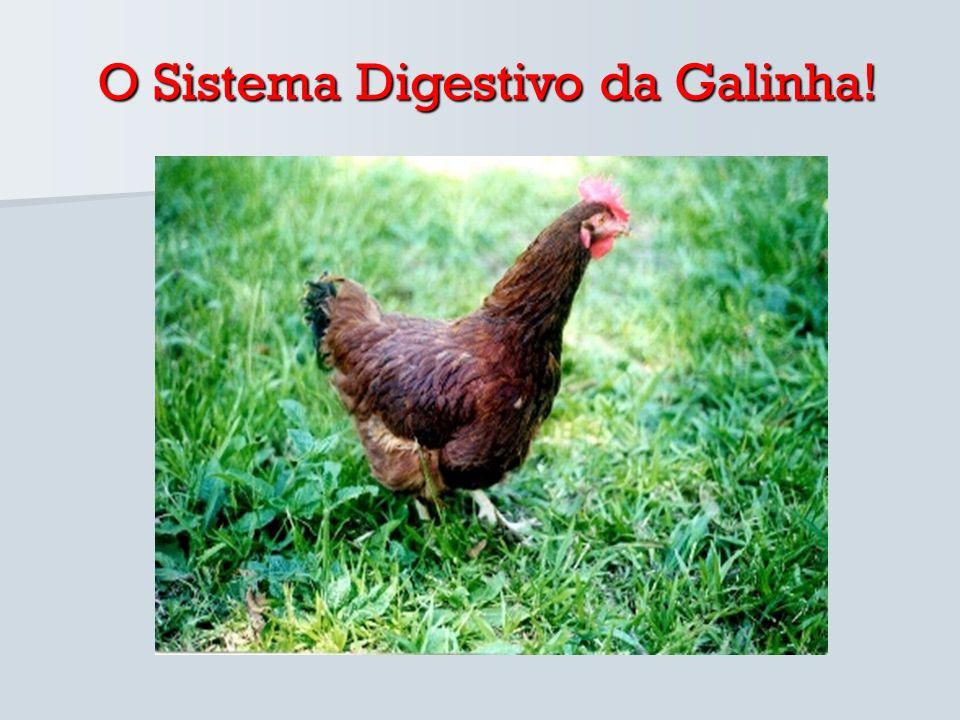 A alimentação da galinha é constituída por grãos ou sementes.