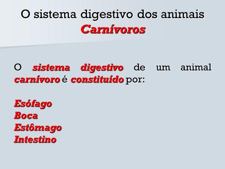 O sistema digestivo dos animais Carnívoros O sistema digestivo de um animal carnívoro é constituído por: EsófagoBocaEstômagoIntestino