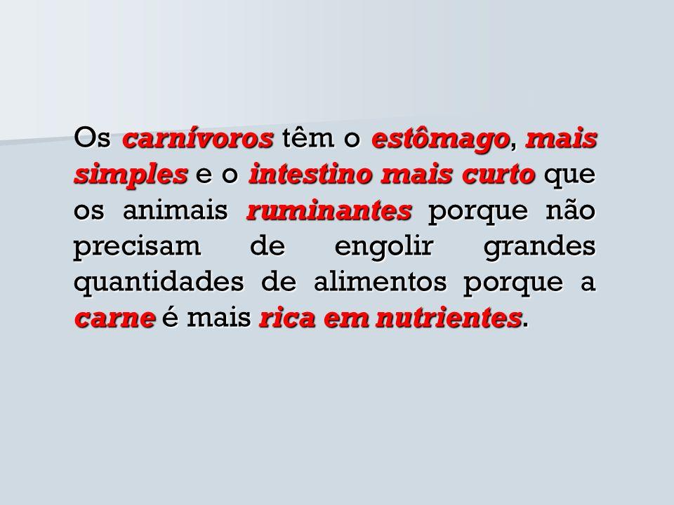 Os carnívoros têm o estômago, mais simples e o intestino mais curto que os animais ruminantes porque não precisam de engolir grandes quantidades de al