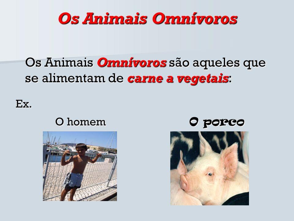 Os Animais Omnívoros Os Animais Omnívoros são aqueles que se alimentam de carne a vegetais: Ex. O homem O porco
