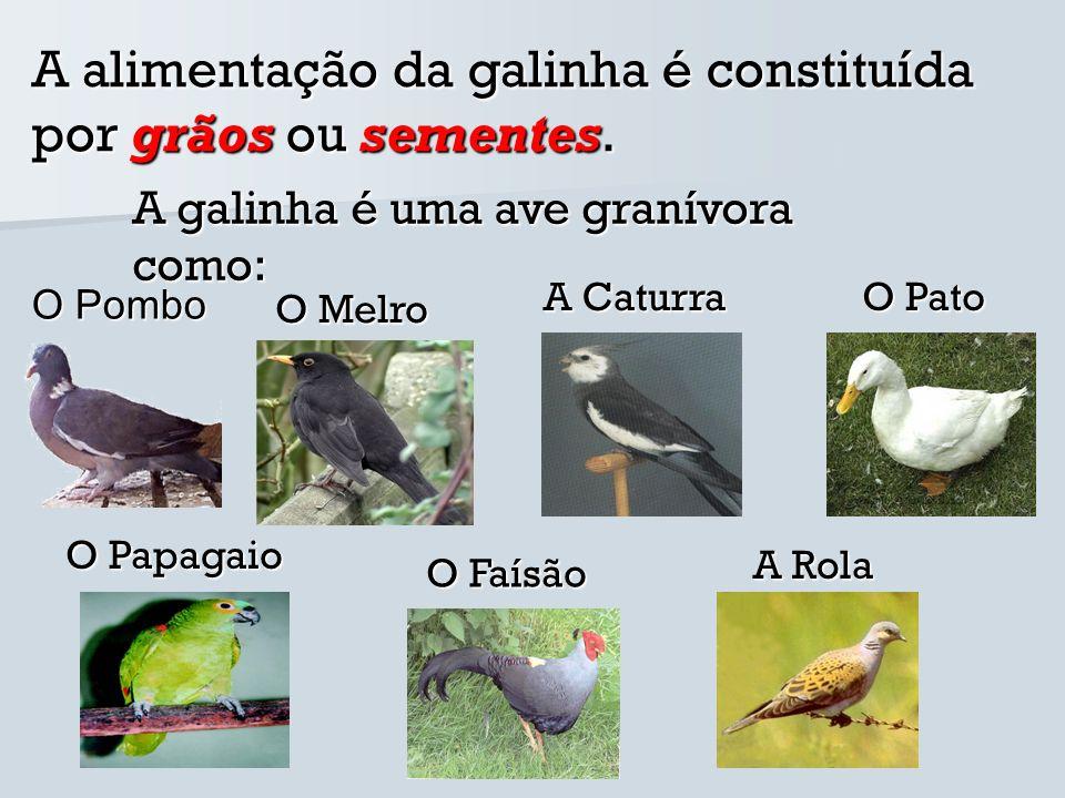 O sistema digestivo da aves granívoras é constituído por sete partes entre elas o: Esófago, Papo, Estômago, Proventrículo, Moela, Intestino, Cloaca.