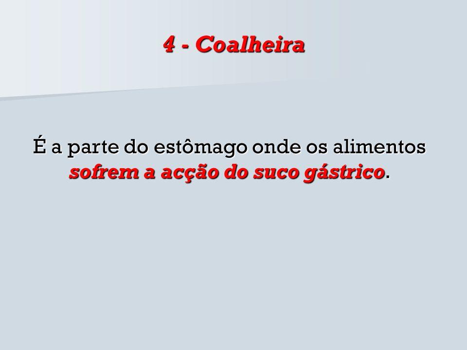 4 - Coalheira É a parte do estômago onde os alimentos sofrem a acção do suco gástrico.
