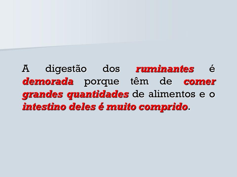 A digestão dos ruminantes é demorada porque têm de comer grandes quantidades de alimentos e o intestino deles é muito comprido.