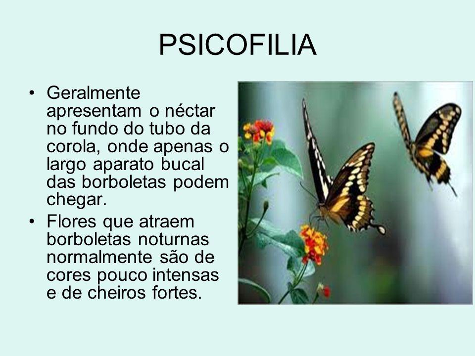 PSICOFILIA Geralmente apresentam o néctar no fundo do tubo da corola, onde apenas o largo aparato bucal das borboletas podem chegar. Flores que atraem