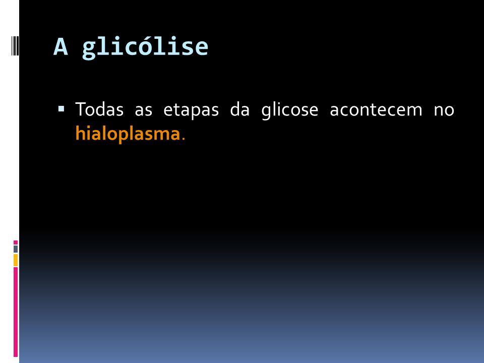 A glicólise Todas as etapas da glicose acontecem no hialoplasma.