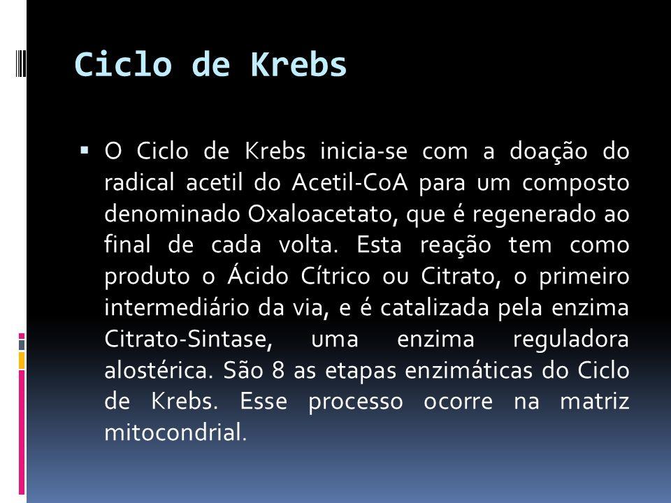 Ciclo de Krebs O Ciclo de Krebs inicia-se com a doação do radical acetil do Acetil-CoA para um composto denominado Oxaloacetato, que é regenerado ao f
