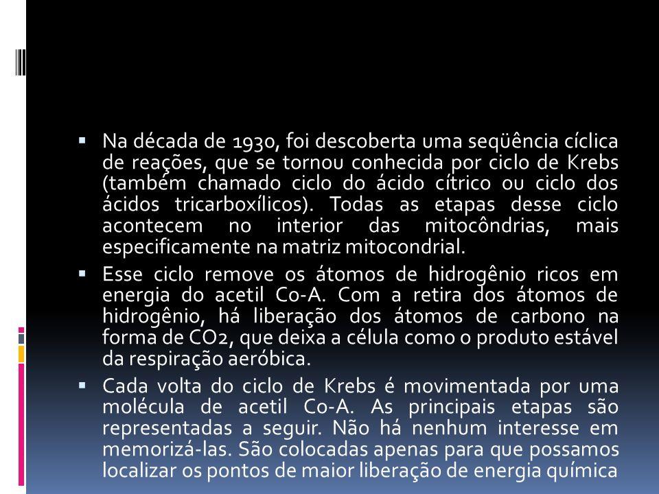 Na década de 1930, foi descoberta uma seqüência cíclica de reações, que se tornou conhecida por ciclo de Krebs (também chamado ciclo do ácido cítrico