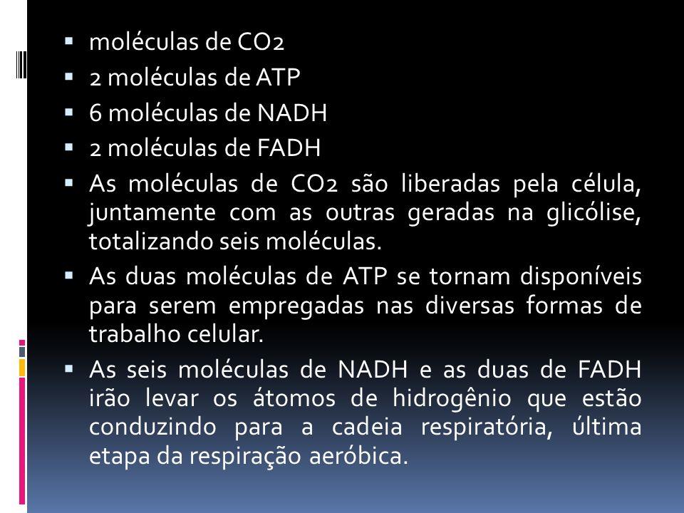 moléculas de CO2 2 moléculas de ATP 6 moléculas de NADH 2 moléculas de FADH As moléculas de CO2 são liberadas pela célula, juntamente com as outras ge