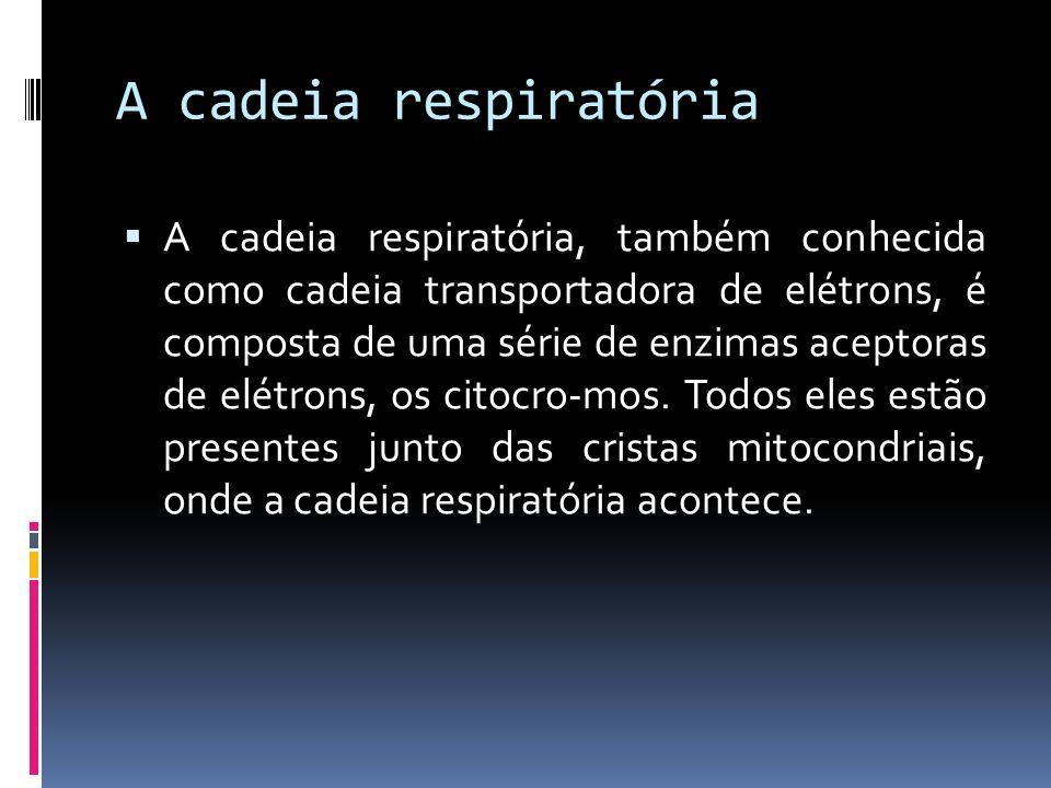 A cadeia respiratória A cadeia respiratória, também conhecida como cadeia transportadora de elétrons, é composta de uma série de enzimas aceptoras de