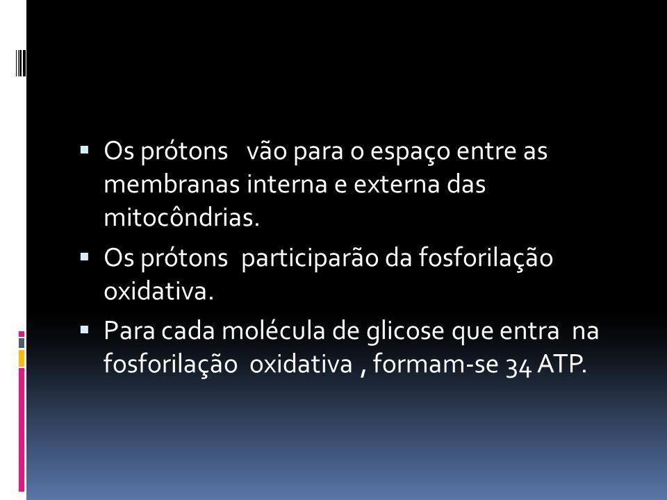Os prótons vão para o espaço entre as membranas interna e externa das mitocôndrias. Os prótons participarão da fosforilação oxidativa. Para cada moléc