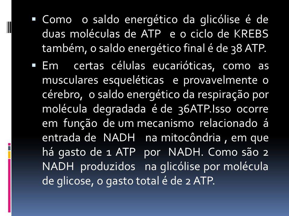 Como o saldo energético da glicólise é de duas moléculas de ATP e o ciclo de KREBS também, o saldo energético final é de 38 ATP. Em certas células euc