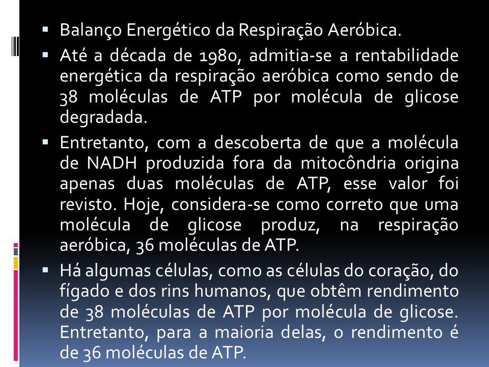 Balanço Energético da Respiração Aeróbica. Até a década de 1980, admitia-se a rentabilidade energética da respiração aeróbica como sendo de 38 molécul