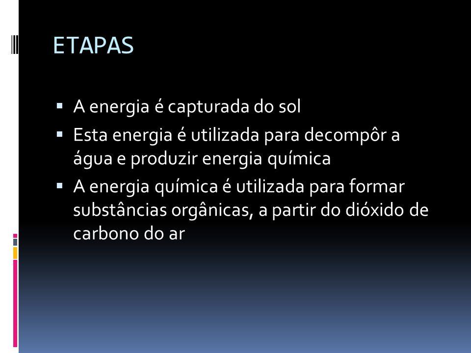 ETAPAS A energia é capturada do sol Esta energia é utilizada para decompôr a água e produzir energia química A energia química é utilizada para formar