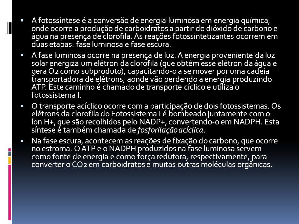 A fotossíntese é a conversão de energia luminosa em energia química, onde ocorre a produção de carboidratos a partir do dióxido de carbono e água na p