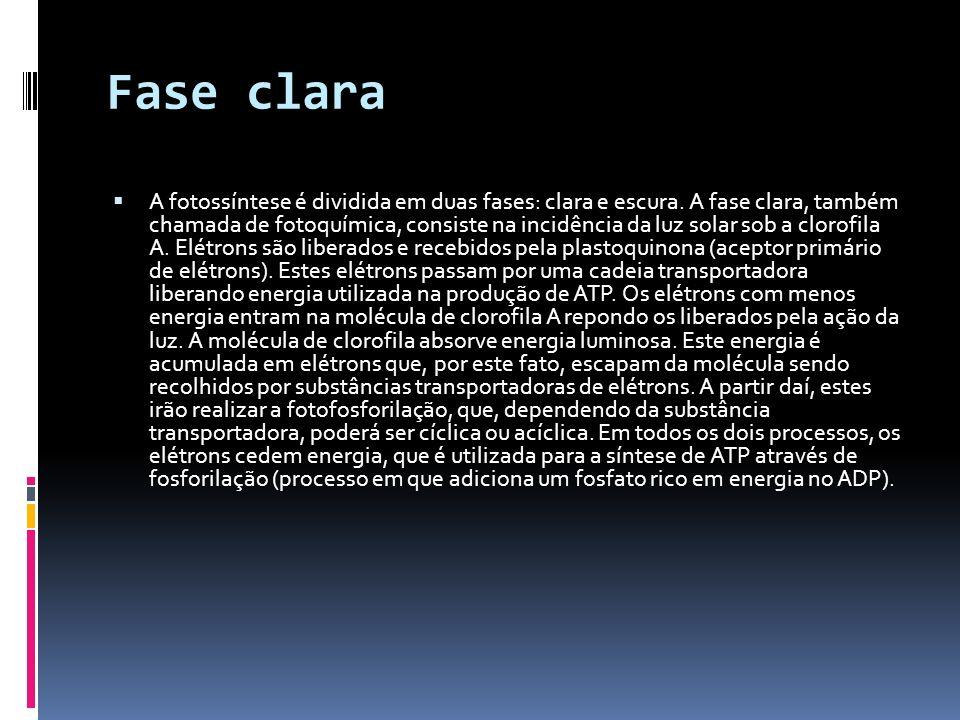 Fase clara A fotossíntese é dividida em duas fases: clara e escura. A fase clara, também chamada de fotoquímica, consiste na incidência da luz solar s