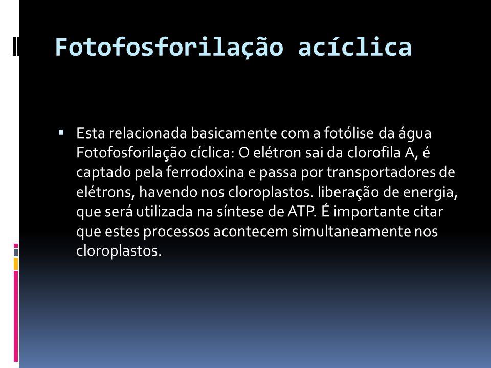 Fotofosforilação acíclica Esta relacionada basicamente com a fotólise da água Fotofosforilação cíclica: O elétron sai da clorofila A, é captado pela f
