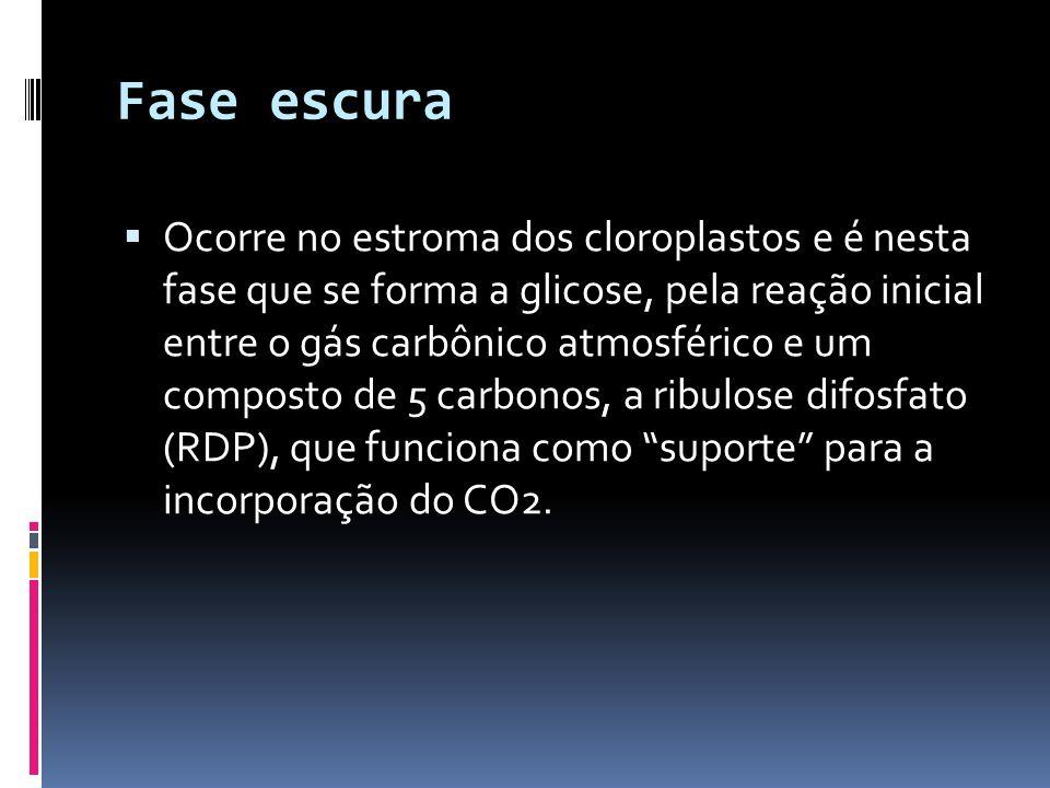 Fase escura Ocorre no estroma dos cloroplastos e é nesta fase que se forma a glicose, pela reação inicial entre o gás carbônico atmosférico e um compo