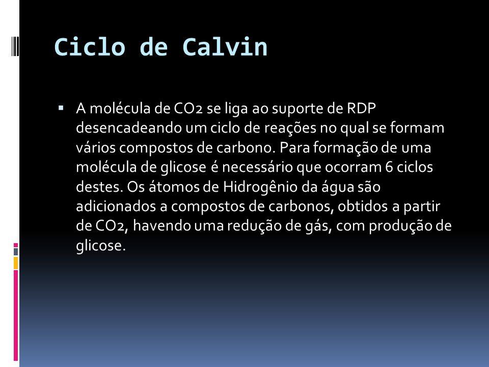 Ciclo de Calvin A molécula de CO2 se liga ao suporte de RDP desencadeando um ciclo de reações no qual se formam vários compostos de carbono. Para form