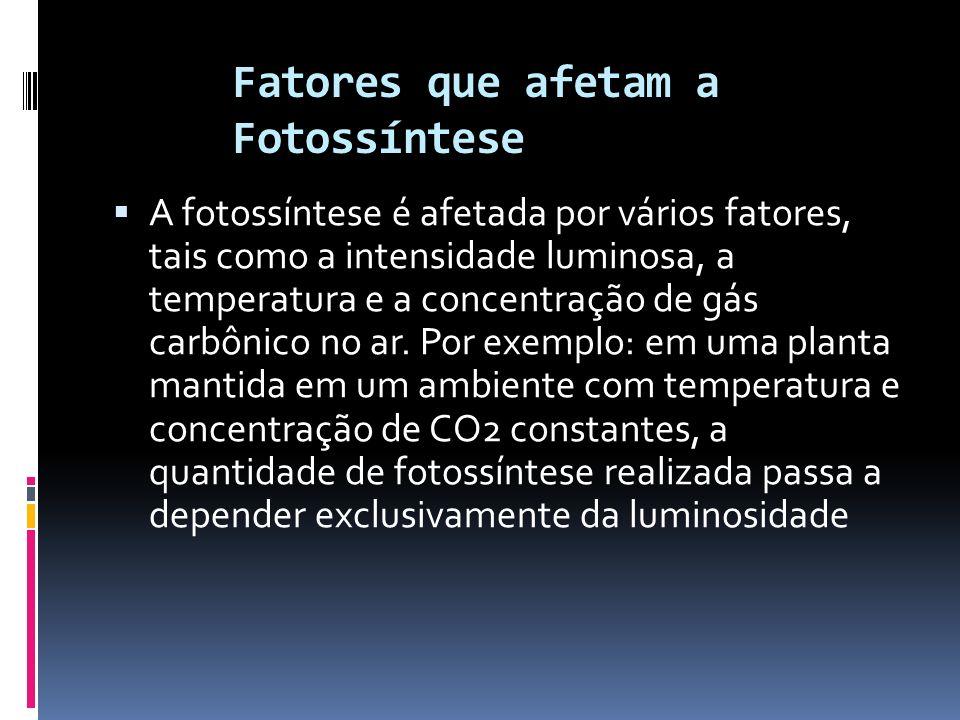 Fatores que afetam a Fotossíntese A fotossíntese é afetada por vários fatores, tais como a intensidade luminosa, a temperatura e a concentração de gás