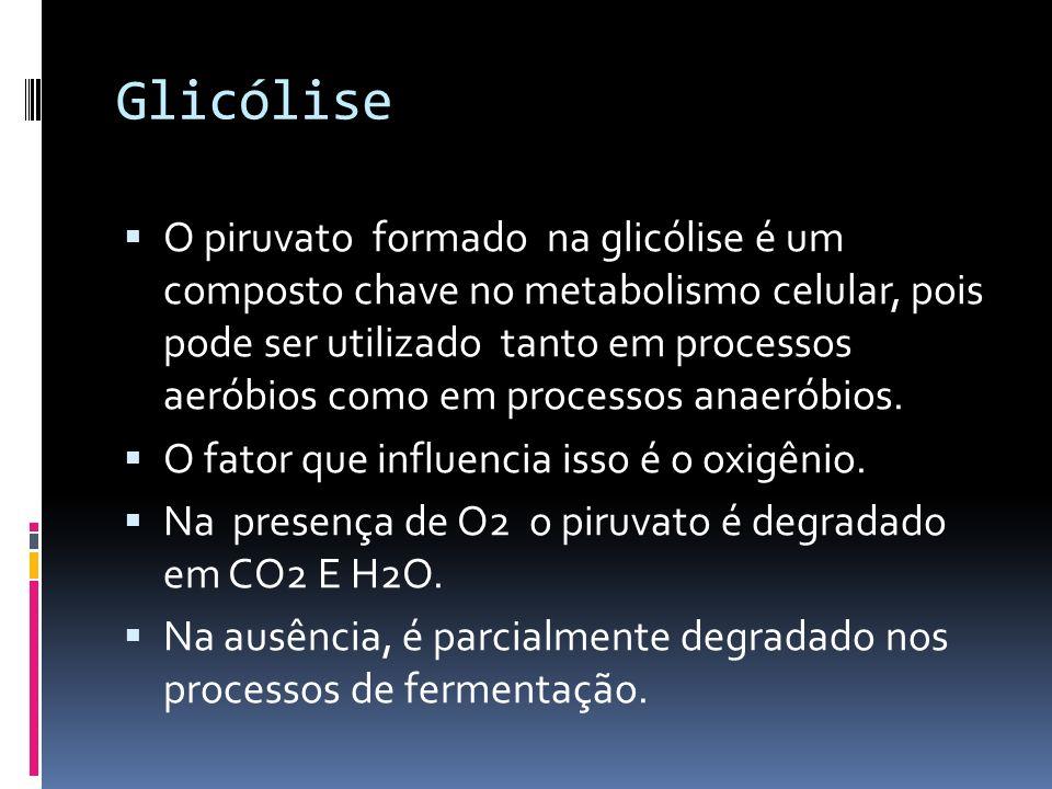 Glicólise O piruvato formado na glicólise é um composto chave no metabolismo celular, pois pode ser utilizado tanto em processos aeróbios como em proc