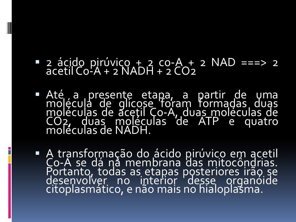 2 ácido pirúvico + 2 co-A + 2 NAD ===> 2 acetil Co-A + 2 NADH + 2 CO2 Até a presente etapa, a partir de uma molécula de glicose foram formadas duas mo