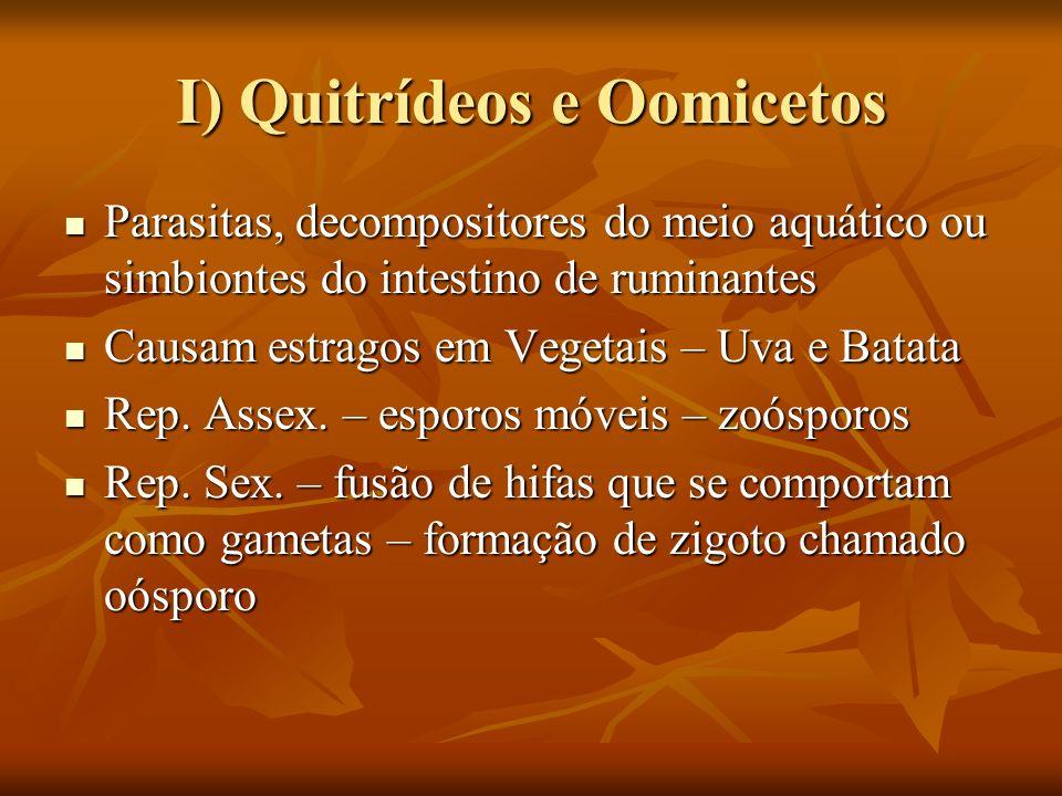 I) Quitrídeos e Oomicetos Parasitas, decompositores do meio aquático ou simbiontes do intestino de ruminantes Parasitas, decompositores do meio aquáti