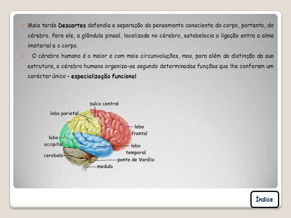Mais tarde Descartes defendia a separação do pensamento consciente do corpo, portanto, do cérebro. Para ele, a glândula pineal, localizada no cérebro,