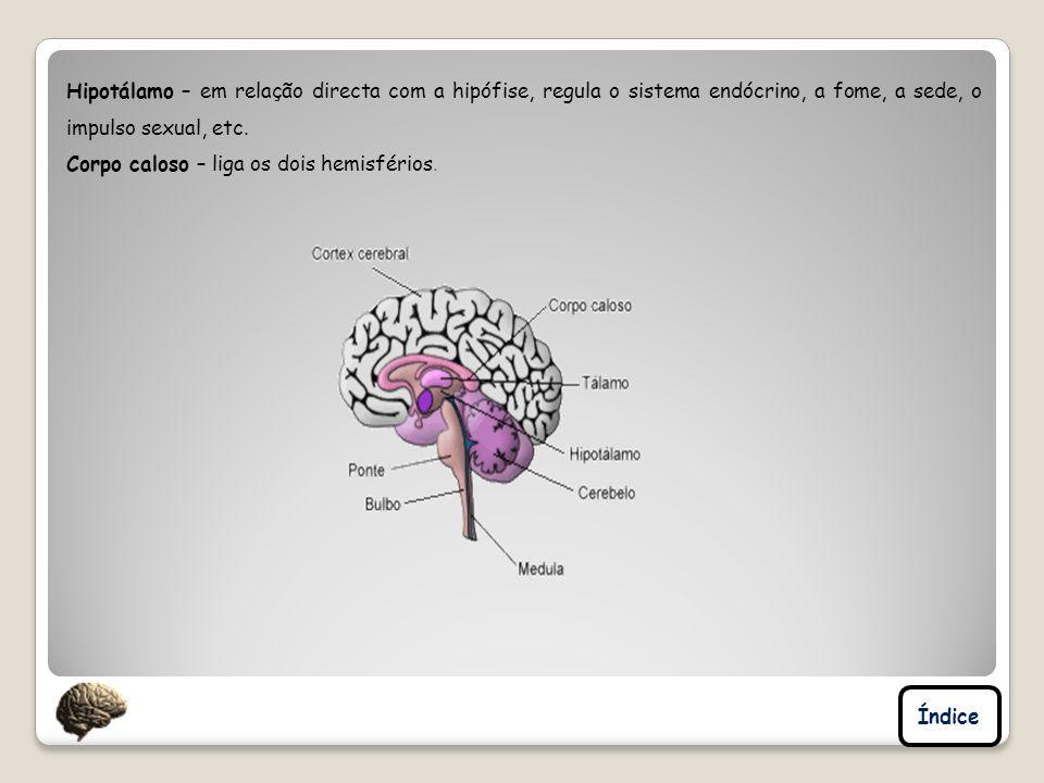 Hipotálamo – em relação directa com a hipófise, regula o sistema endócrino, a fome, a sede, o impulso sexual, etc. Corpo caloso – liga os dois hemisfé