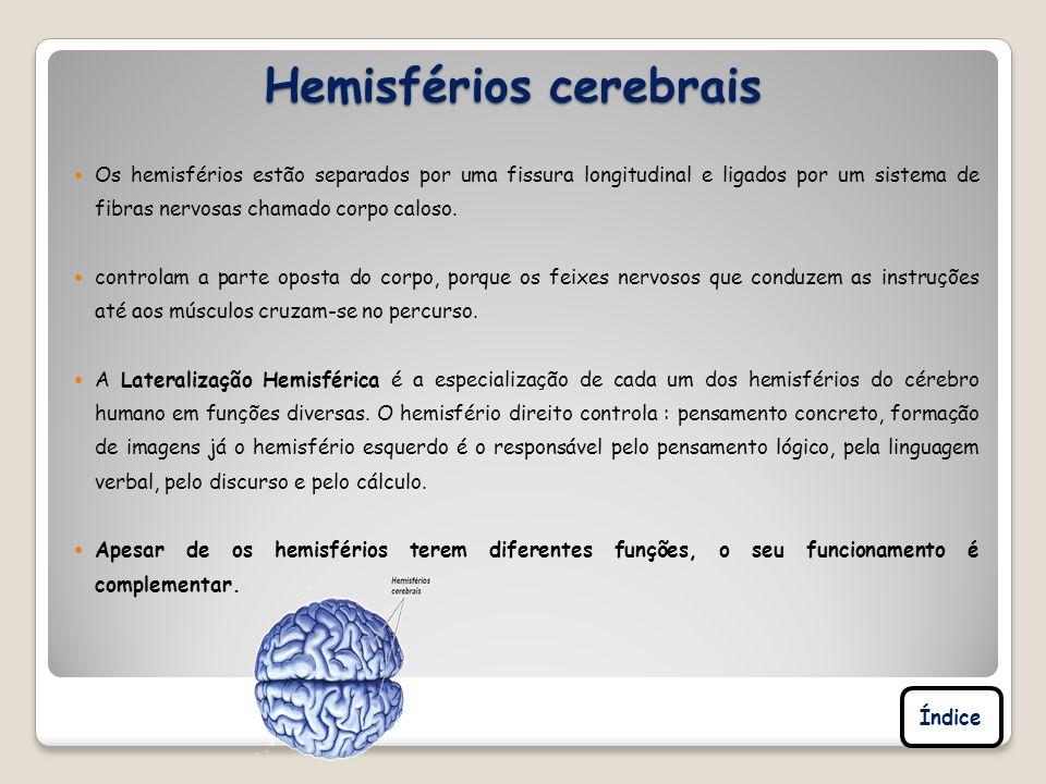 Hemisférios cerebrais Os hemisférios estão separados por uma fissura longitudinal e ligados por um sistema de fibras nervosas chamado corpo caloso. co