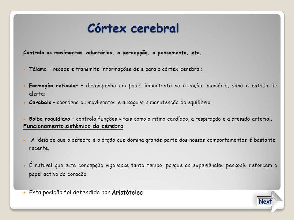 Córtex cerebral Controla os movimentos voluntários, a percepção, o pensamento, etc. Tálamo – recebe e transmite informações de e para o córtex cerebra
