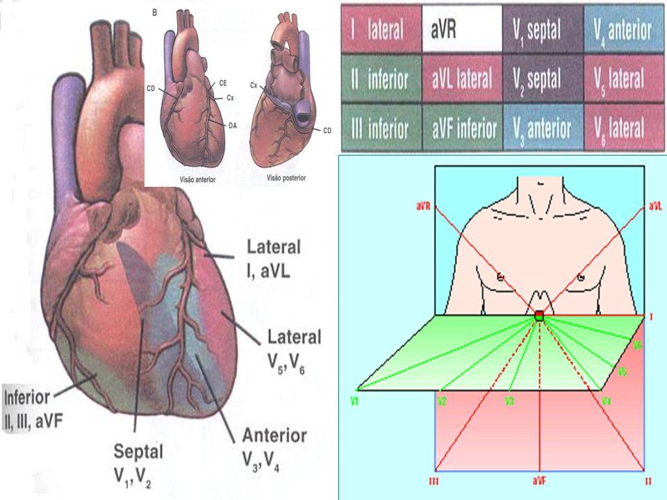 Relações Anatômicas (CD) (DA) (Cx)