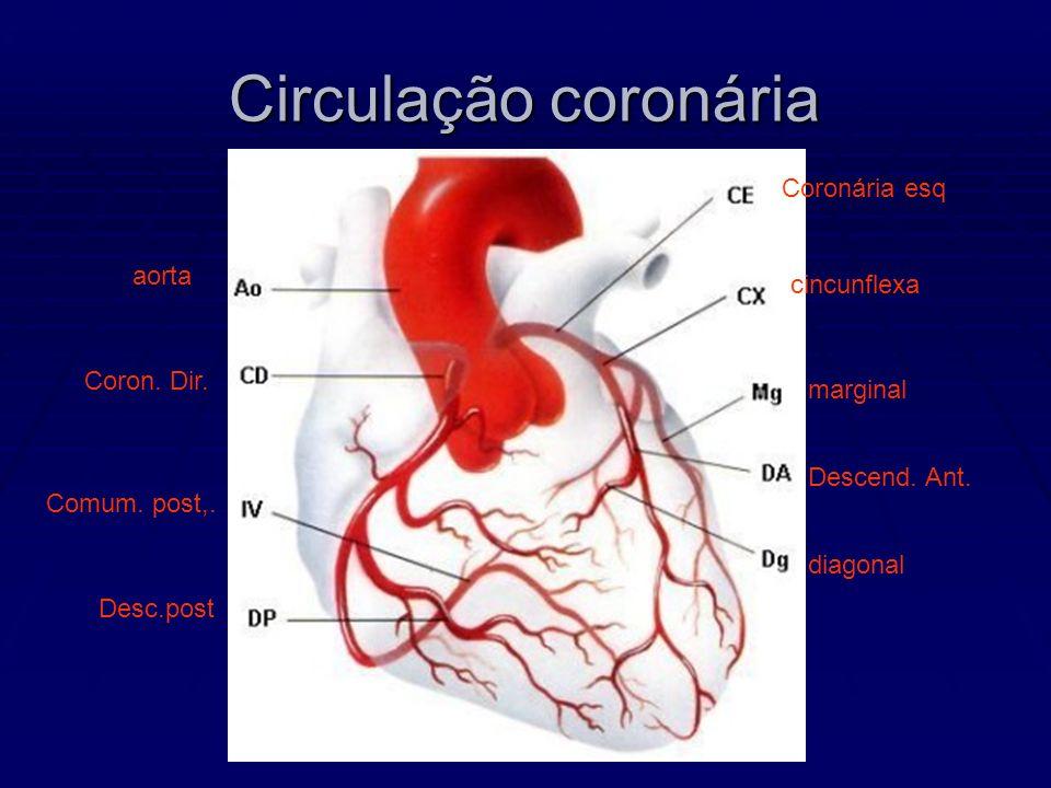 Circulação coronária Coronária esq cincunflexa marginal Descend. Ant. diagonal aorta Coron. Dir. Desc.post Comum. post,.