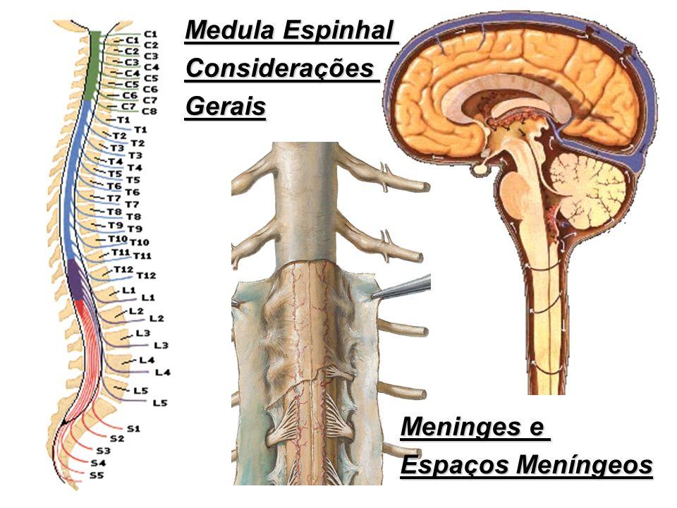 Medula Espinhal ConsideraçõesGerais Meninges e Espaços Meníngeos