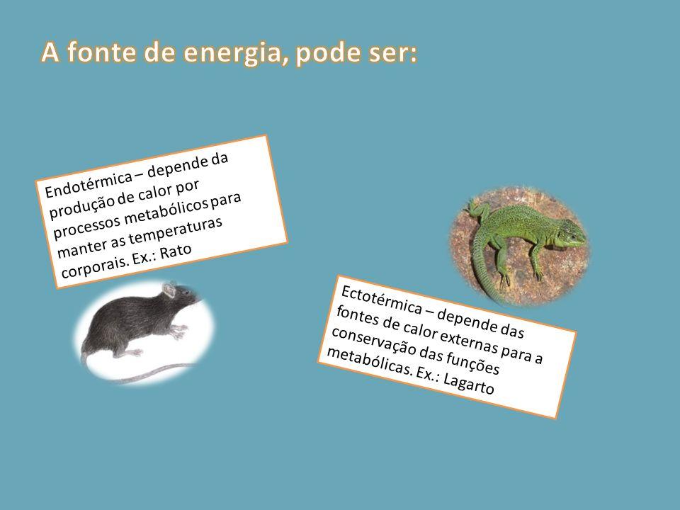 Endotérmica – depende da produção de calor por processos metabólicos para manter as temperaturas corporais. Ex.: Rato Ectotérmica – depende das fontes