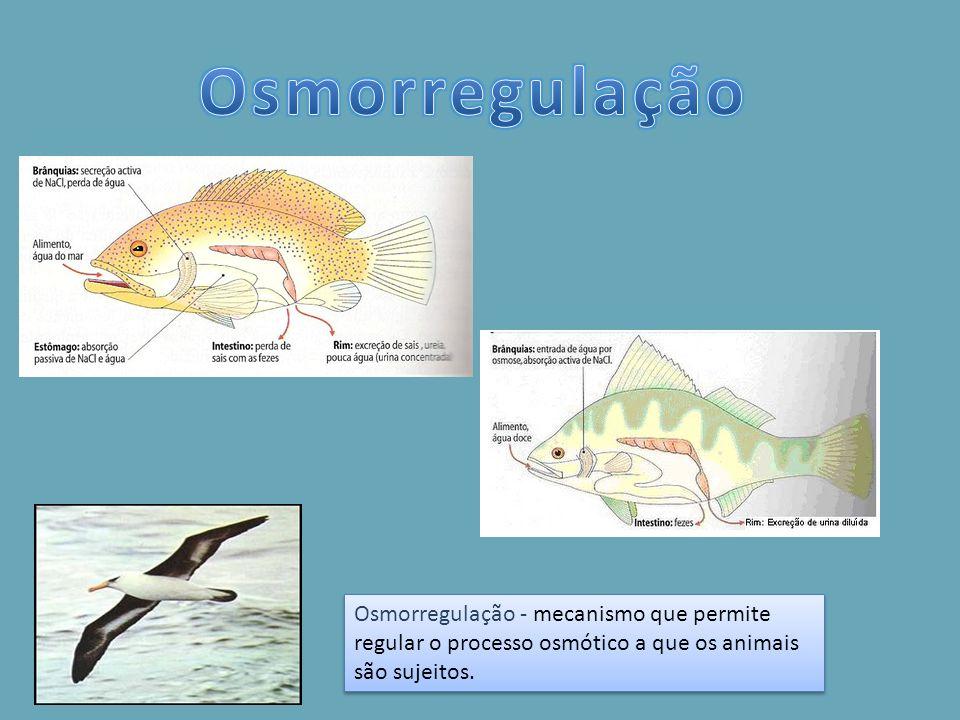 Osmorregulação - mecanismo que permite regular o processo osmótico a que os animais são sujeitos.